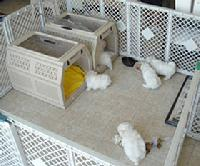 Susen's Maltese- Maltese Puppies